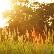 Gentle Teaching Blog Post 3